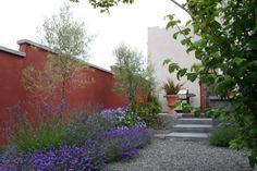 aménagement-jardin-méditerranéen-lavande-fleurs-pourpres-aliviers-gravier