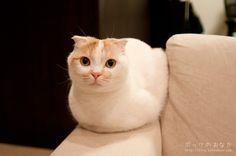 Vi diamo il buongiorno con questo buffo micio: oltre a essere senza orecchie, non sembra anche senza gambe? :)