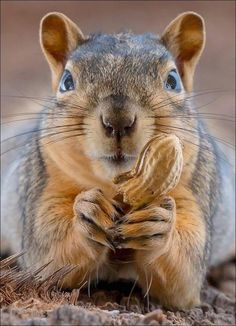 Chipmunks, Mother Earth, Cute Animals, Creatures, Funny, Squirrels, Painting, Blog, Gifts