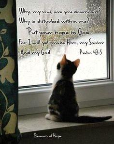 Psalms 43:5