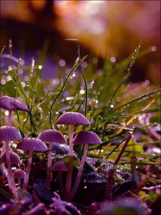 magic mushrooms by Lenna3