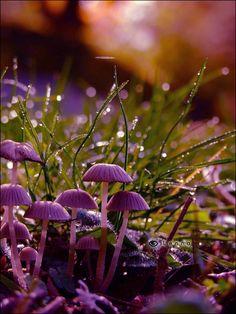 ** Mushrooms.