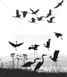 Herons on the shores of Lake