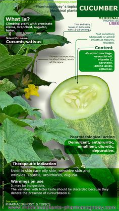 http://www.medicinalplants-pharmacognosy.com/herbs-medicinal-plants/cucumber/ Cucumber benefits. Infographic. Summary of the general characteristics of the Cucumber. Medicinal properties, benefits and uses more common of Cucumber. http://www.medicinalplants-pharmacognosy.com/herbs-medicinal-plants/cucumber/