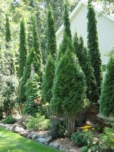 These uplifting evergreens that not only provide screening from the yard next door but become a wall that contains the garden. Whatever is (or isn't) blooming in front of the trees, the homeowners have surroundings with real character to look at from the house and back deck.