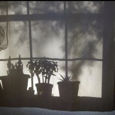 Plant shadows against the window