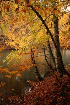 Fall! Omg... Colorful fall leaves, hoodies and bonfires... Yasss!