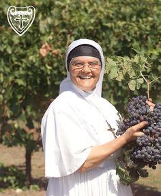 Katynabio: Le suore fanno il vino biologico più famoso d'Euro...