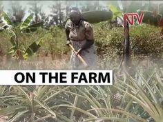 On the Farm: Food Security