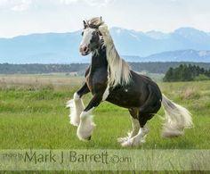 Stock Photos Horses, Equine Photography and Video by Mark J. Pretty Horses, Beautiful Horses, Gypsy Horse, Fox Dog, Horse Photos, Horse Barns, Equine Photography, Four Legged, Pinto Horses