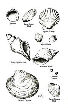Identifying Sea Shells