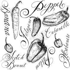 chili pepper sketch - Google Search