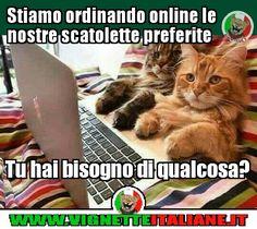 Gatti online (www.VignetteItaliane.it)