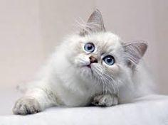 cats hd - Pesquisa do Google