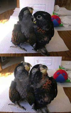 É isso. Estas aves têm AS CARAS da felicidade. SINTA A ALEGRIA.