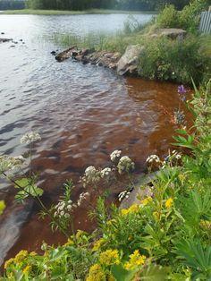 Evijärven rantaa,oli lämmin vesi