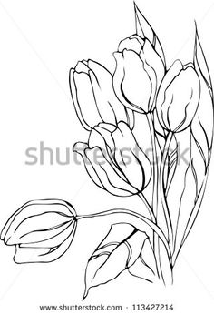 Hand drawn tulips. Vector.