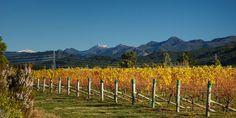 Autumn vines behind Vintners Retreat
