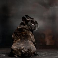My Frenchie looks just like this when something annoys her.