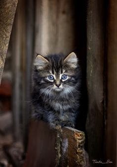 """""""If homeless cats could talk, they would probably say, give me shelter, food, companionship, and love and I'll be yours for life."""" --Susan Easterly        Please adopt."""