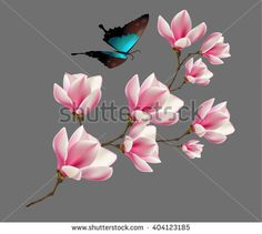 Spring background with blossom brunch of pink magnolia flowers and butterfly. Vector