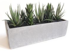 Cactus Garden // Cement Planter - modern - accessories and decor - by LushModern like this for outside door on deck