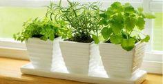Há muito tempo as plantas são escolhidas para decorar espaços, sejam de uma casa, do escritório, de grandes centros de negócios, dentre outros