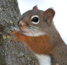 ♥SQ♥ 22 TOO CUTE SQUIRREL COLORFUL | Recent Photos The Commons 20under20 Galleries World Map App Garden ...