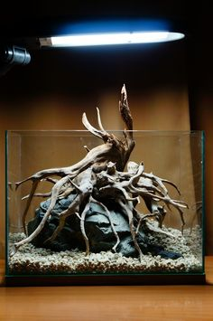 Aquarium Driftwood Hardscape To Make A Beautiful Centerpiece. Purchase driftwood for your aquarium at www.driftwoodboss.com
