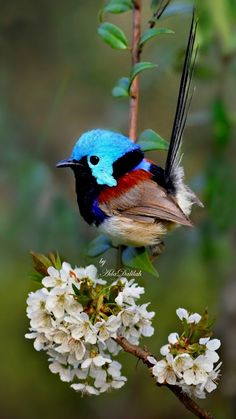 tiny and precious Cute Birds, Pretty Birds, Small Birds, Little Birds, Colorful Birds, Bird Pictures, Animal Pictures, Beautiful Creatures, Animals Beautiful