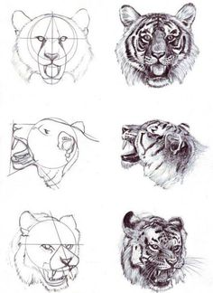 Trilling Exercises To Get Better At Drawing Ideas. Astounding Exercises To Get Better At Drawing Ideas. Cat Drawing, Drawing Sketches, Painting & Drawing, Drawing Ideas, Drawing Faces, Sketching, Animal Sketches, Animal Drawings, Tiger Art