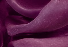 Artist Caren Alpert takes these photographs of food under an electron microscope showing us what is there up close that we rarely get to see: hidden landscapes, patterns and textures. // terra cibus no.39: red cabbage  #AirNZWOW