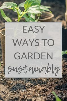 Want to make your garden more eco-friendly? This sustainable gardening guide has lots of easy environmentally friendly gardening tips for greener gardening. Compost Bags, Green Garden, Garden Plants, Gardening Supplies, Gardening Tips, Plant Pests, Sustainable Gardening, Plant Labels