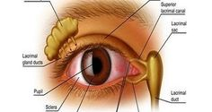 In the a famous Russian surgeon, Vladimir Petrovich Filatov, advised his patients to use alternative medicine to improve their eyesight. It turned out that the recipe brought positive results… Best Eczema Treatment, Eye Treatment, Natural Treatments, Anti Aging Creme, Aging Cream, Eye Sight Improvement, Snoring Solutions, Bonbon, Lash Extensions