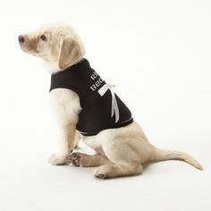 Doggie Ring Bearer Shirt!! My fam is full of girls so this is a cute idea :)
