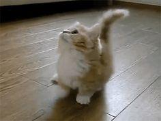 Кавайняшка: кошки и котята