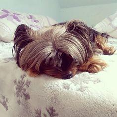 Black doggie sleeping
