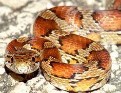 snake in copper
