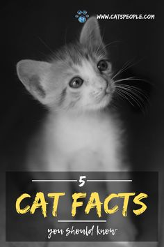 Five interesting facts about cats for cat lovers and cat owners to know. Famous Historical Figures, Cat Info, Interesting Topics, Cat Dad, Cat Names, Cat Health, Cool Cats, More Fun, Cat Lovers