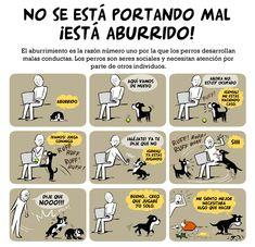 ¿Cuándo una reprimenda conduce a una mala conducta en los perros?