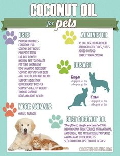 This site has Tons of good information about the health benefits of Coconut Oil for Pets - Cats, Dogs, Birds