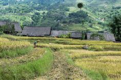The old ways by allenfotowild  trees old houses hillside rice terraces old village Sa Pa Ta Van north Vietnam Rice harvest ripe ric