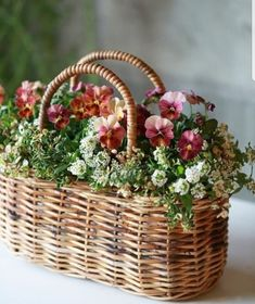 Container gardening is a fun way to add to the visual attraction of your home. Indoor Gardening Supplies, Container Gardening, Green Flowers, Beautiful Flowers, Container Design, Deco Floral, Flower Basket, Hanging Baskets, Pansies