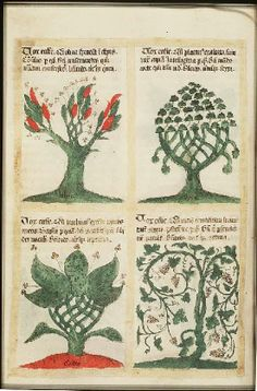 "The trees and their symbolic significance: olive tree - 5th beatitude, plane tree - 6th beatitude, turpentine tree - 7th beatitude, vine - 8th beatitude (Sermon on the Mount), in ""Liber Floridus"", creation: 1120, author: Lambert of Saint Omer, edition: 1460, folio 90v, Koninklijke Bibliotheek"