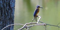Birding Video Taken With Canon Powershot Sx60 Hs Zoomed In Up Close Canon Powershot Powershot Canon