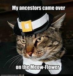 Meow-flower Thanksgiving kitty...