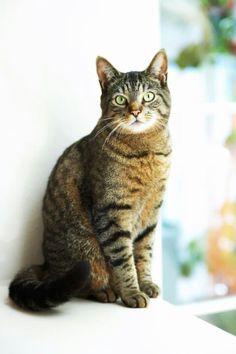 Looks just like mine! Personalised Calendar, Metal Easel, Walgreens Photo, Warrior Cats, Beautiful Cats, Hello Beautiful, Wood Paneling, I Love Cats, Cat Lady