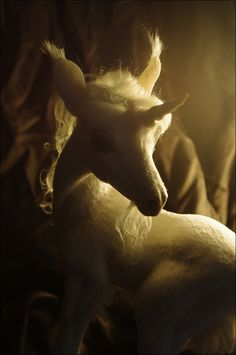 Lovely Unicorn Photo