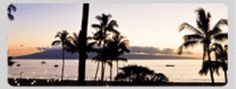 Maui Palm Trees at Sunset.  Official Guide to Visiting Maui