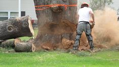 If you are in need of a professional and stump removal service be sure to contact our skilled and professional Sydney stump grinders here at Sydney Tree and Garden. Tree Trimming Service, Garden Clearance, Stump Grinder, Sydney Gardens, Stump Removal, Popular Tree, Tree Felling, Tree Pruning, Gardening Services